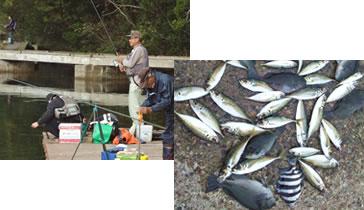 釣りイカダと釣りの釣果